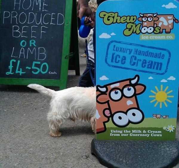 Il cagnolino del gelataio era di una razza molto rara