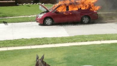 Photo of Dopo aver incendiato l'auto dei vicini, gli asinelli si concessero un po' di relax