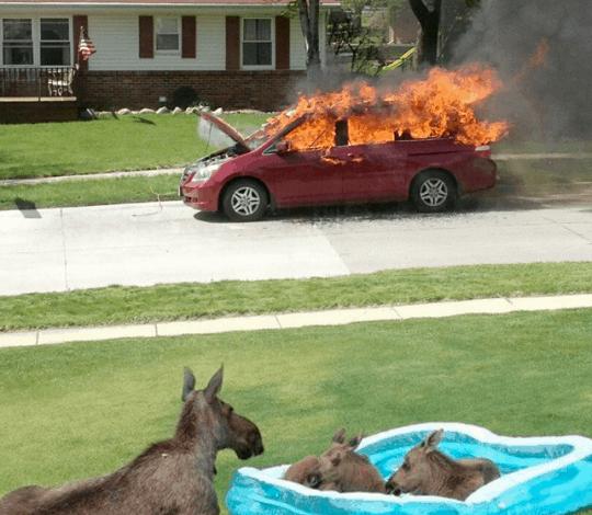 Dopo aver incendiato l'auto dei vicini, gli asinelli si concessero un po' di relax