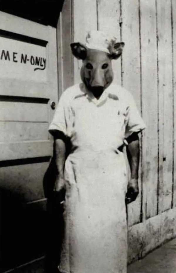 Photo of Il grosso maiale rimase deluso: L'accesso gli era stato precluso