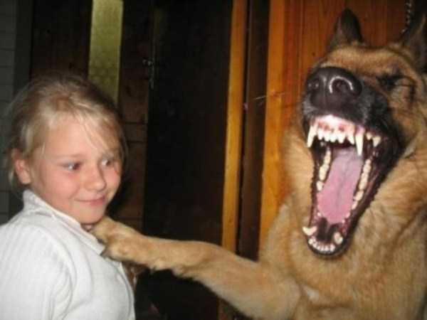 Photo of Quella battuta piacque molto al suo cane