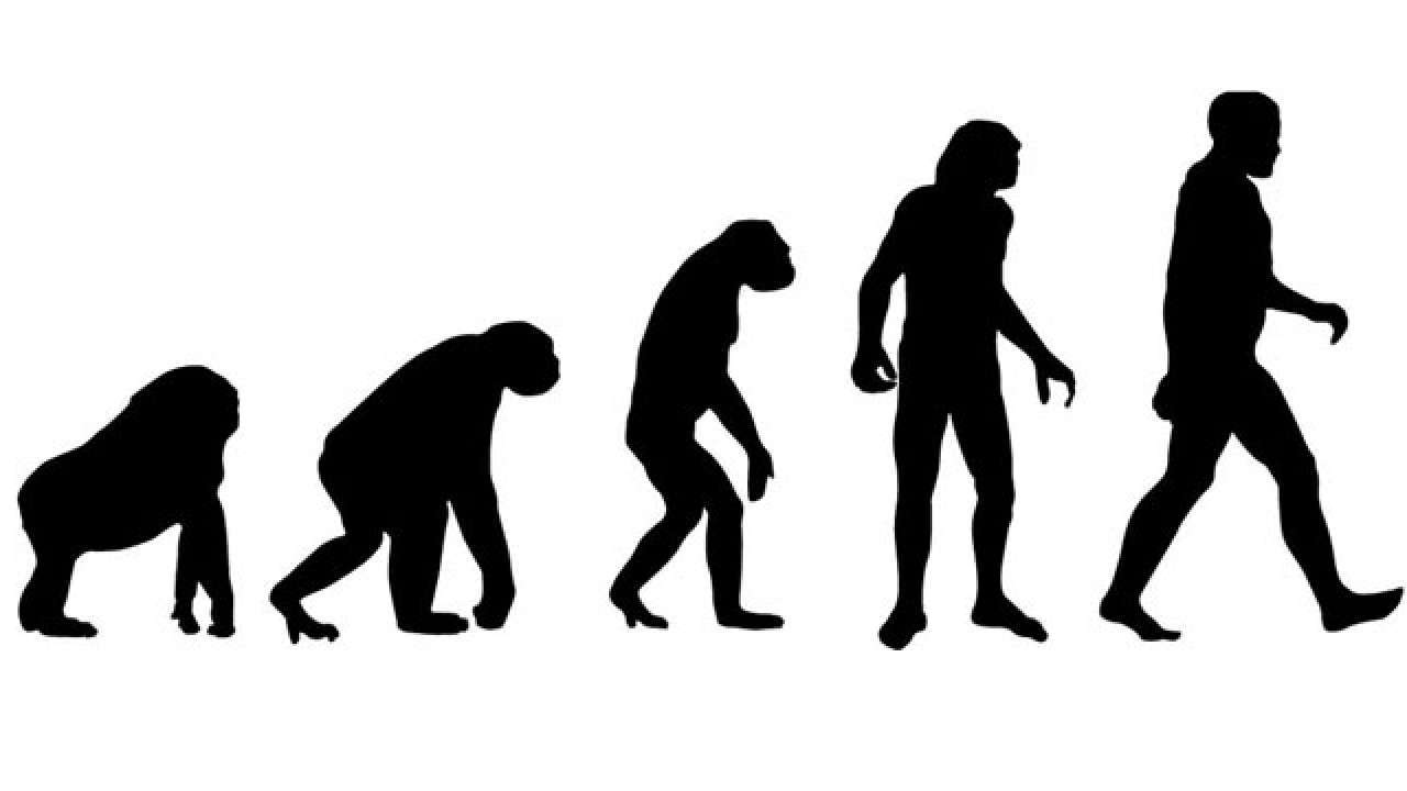 Photo of Se gli umani si sono evoluti dalle scimmie, come mai ci sono ancora scimmie?